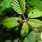 Ladybird by Serunson