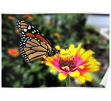 Monarch Butterfly 001 Poster