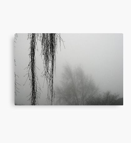 Hanging Branches In The Fog Canvas Print