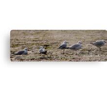 Seagulls Inline Metal Print