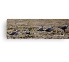 Seagulls Inline Canvas Print