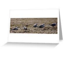 Seagulls Inline Greeting Card
