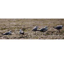 Seagulls Inline Photographic Print