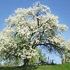 April Tree by Nadya Johnson