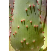 Aloe how are you? Photographic Print