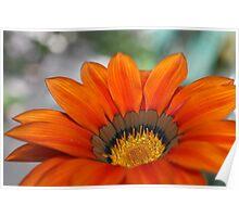 Orange Flower 7341 Poster