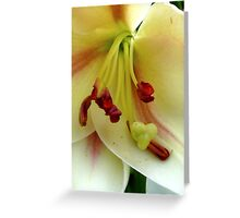 White Lily with Red Stamens Greeting Card