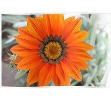 Orange flower 7332 Poster