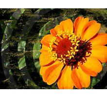 Orange Is The New Photographic Print