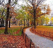 Fall in New York by Stephen Burke