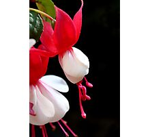 Red & white flower 7396 Photographic Print