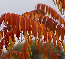 The Fiery Colors of the Autumn Sumac by Georgia Mizuleva