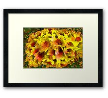 Gustav Does Daffs Framed Print