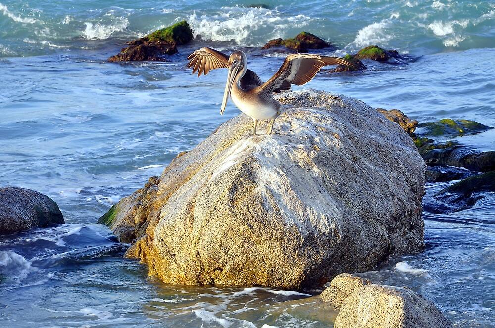 My Piece of the Rock! by John  Kapusta