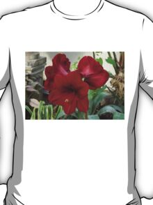 Christmas Red Amaryllis Flowers T-Shirt