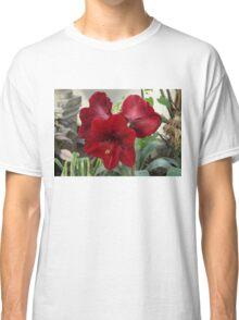 Christmas Red Amaryllis Flowers Classic T-Shirt