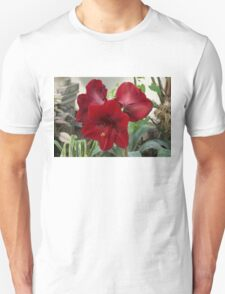 Christmas Red Amaryllis Flowers Unisex T-Shirt