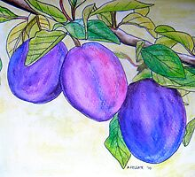 Plums by Alexandra Felgate