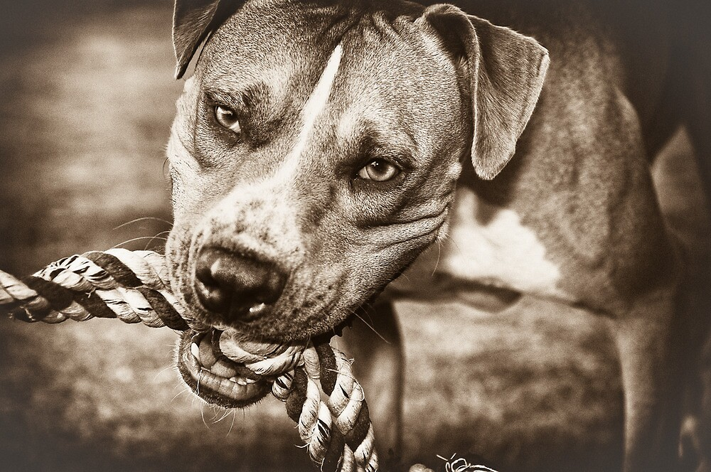 Play with me (sepia) by Craig Hender