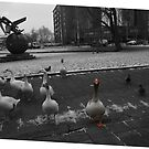 Gaggle of Gouda geese going gangbusters.  by MrJoop