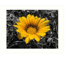 Large Yellow Flower Art Print
