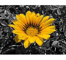 Large Yellow Flower Photographic Print