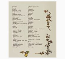 Language of Flowers Kate Greenaway 1884 0014 Descriptions of Specific Flower Significations One Piece - Short Sleeve