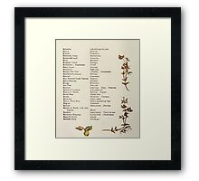 Language of Flowers Kate Greenaway 1884 0014 Descriptions of Specific Flower Significations Framed Print