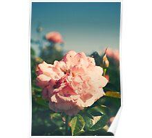Retro Rose Poster