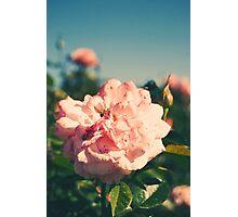 Retro Rose Photographic Print