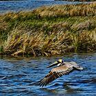 Beth's pelican by LeeDukes