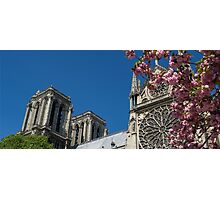 Notre Dame Pink Flowers Photographic Print