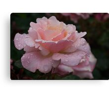 Rose and Rain in Pink Canvas Print