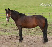 Kahlua - NNEP Ottawa, ON by Tracey  Dryka