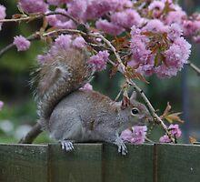 Grey Squirrel looking for Treats by AnnDixon