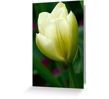 Creamy Yellow Tulip Flower Greeting Card