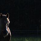 28.6.2015: Finnhorse by Petri Volanen