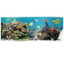 Underwater panorama with colorful tropical fish and sea life Poster