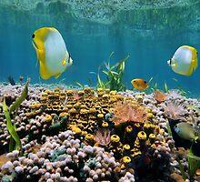 Coral garden underwater reflected on water surface by Dam - www.seaphotoart.com