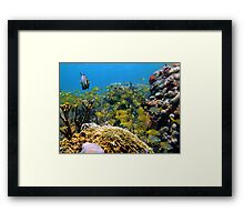 Shoal of tropical fish in a coral reef Framed Print