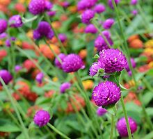 In a World of Mixed Flowers by Scott Mitchell