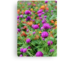 In a World of Mixed Flowers Canvas Print