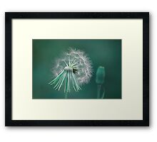 Night Wishes Framed Print