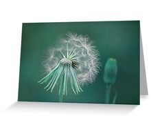 Night Wishes Greeting Card