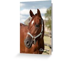 Chico - NNEP Ottawa, ON Greeting Card