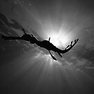 Seadragon &amp; Sunlight by MattTworkowski