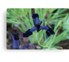 bejewelled black velvet-tipped petals Canvas Print