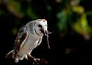 Owl versus Mouse by Andrew Dickman