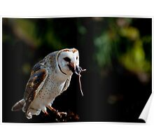 Owl versus Mouse Poster