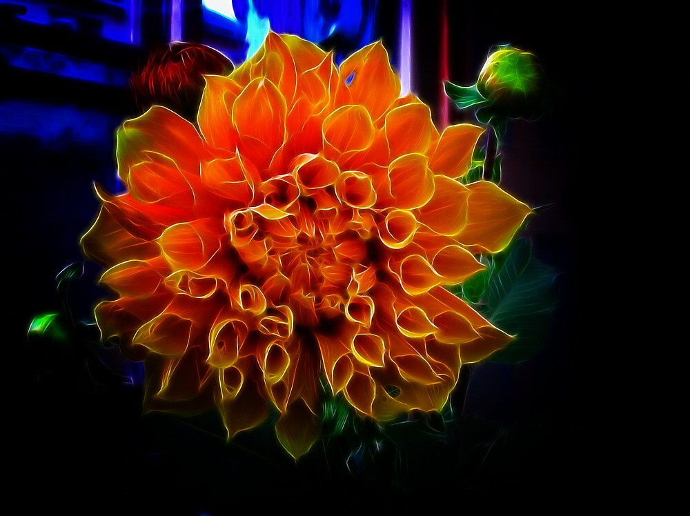 Giant Dahlia by Elaine Game